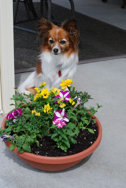 Poppet on patio