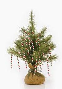 Tree_canes